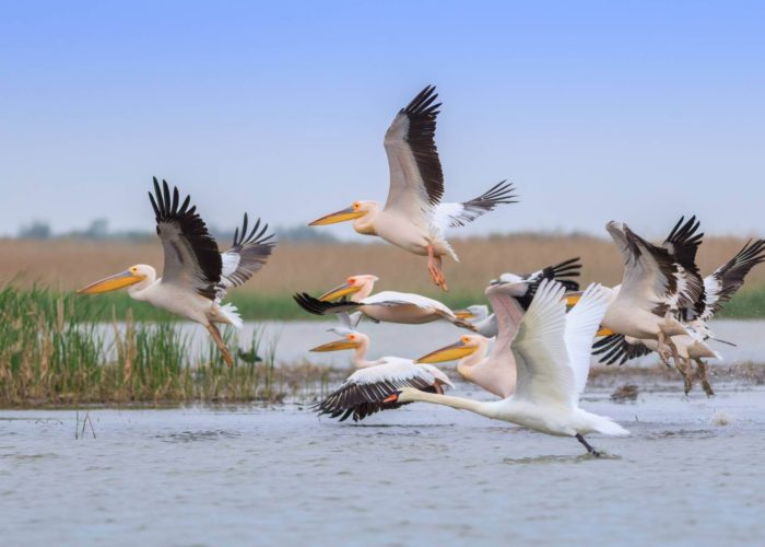 Danube Delta Tour from Bucharest
